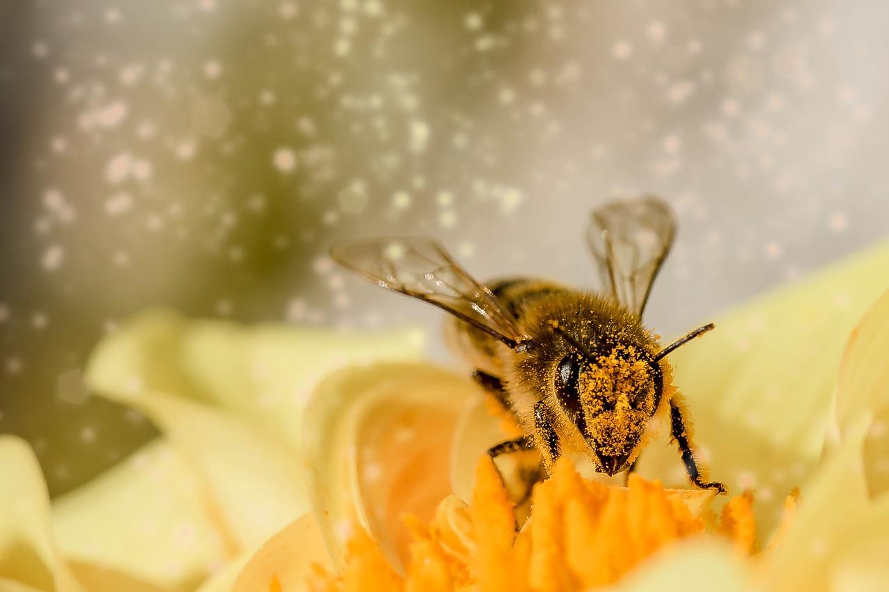 Rettet die Bienen: Grüne verteilen Samentüten bei Grünland-Der Bioladen zum Weltbienentag