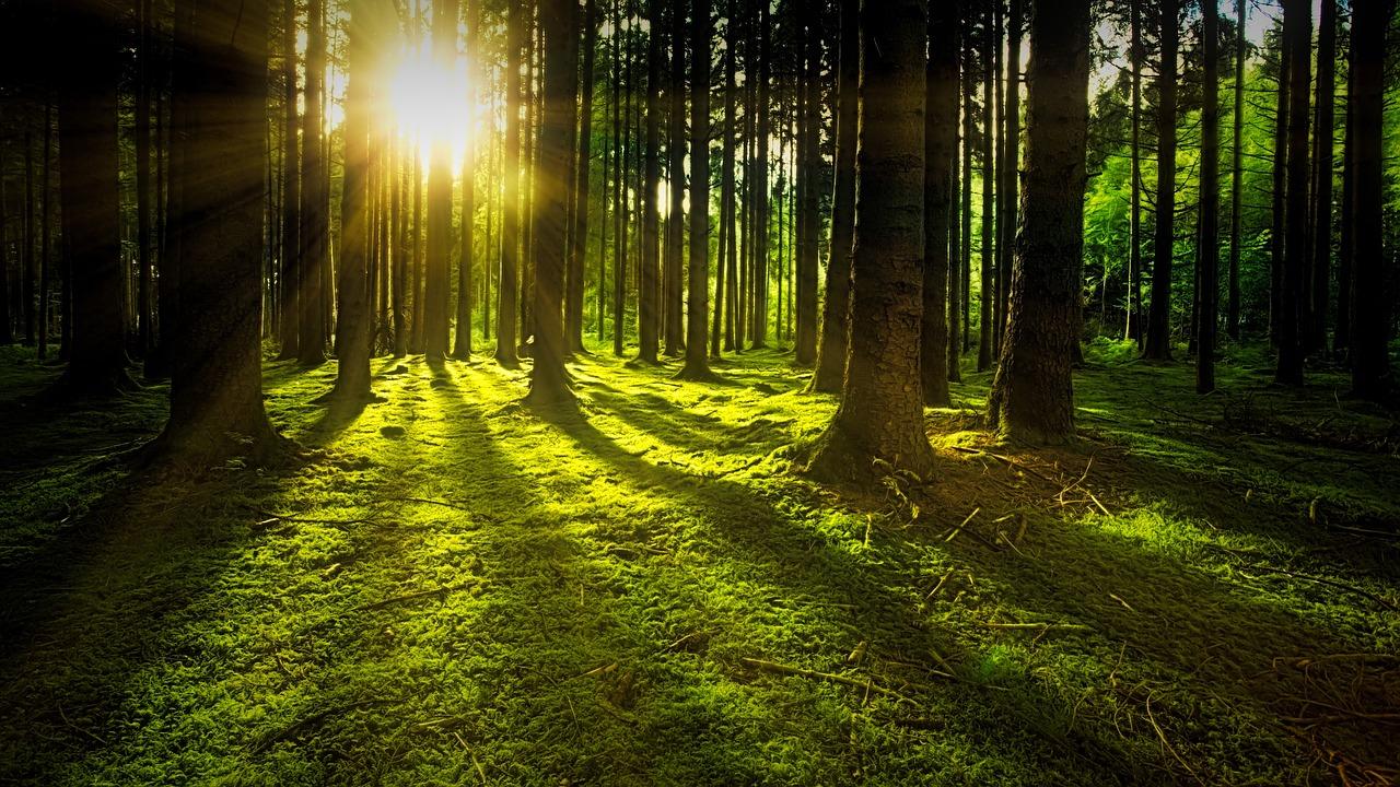 Dorothea Frederking: Gute Betreuung von Kleinstprivatwald fördern